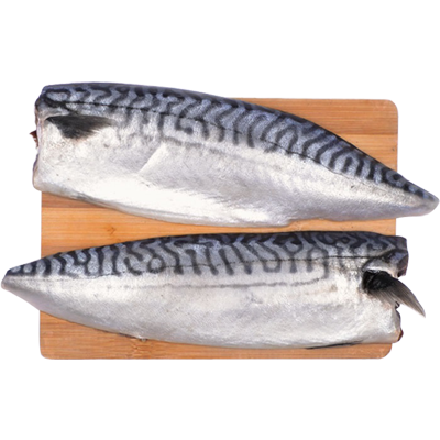 Mackerel L